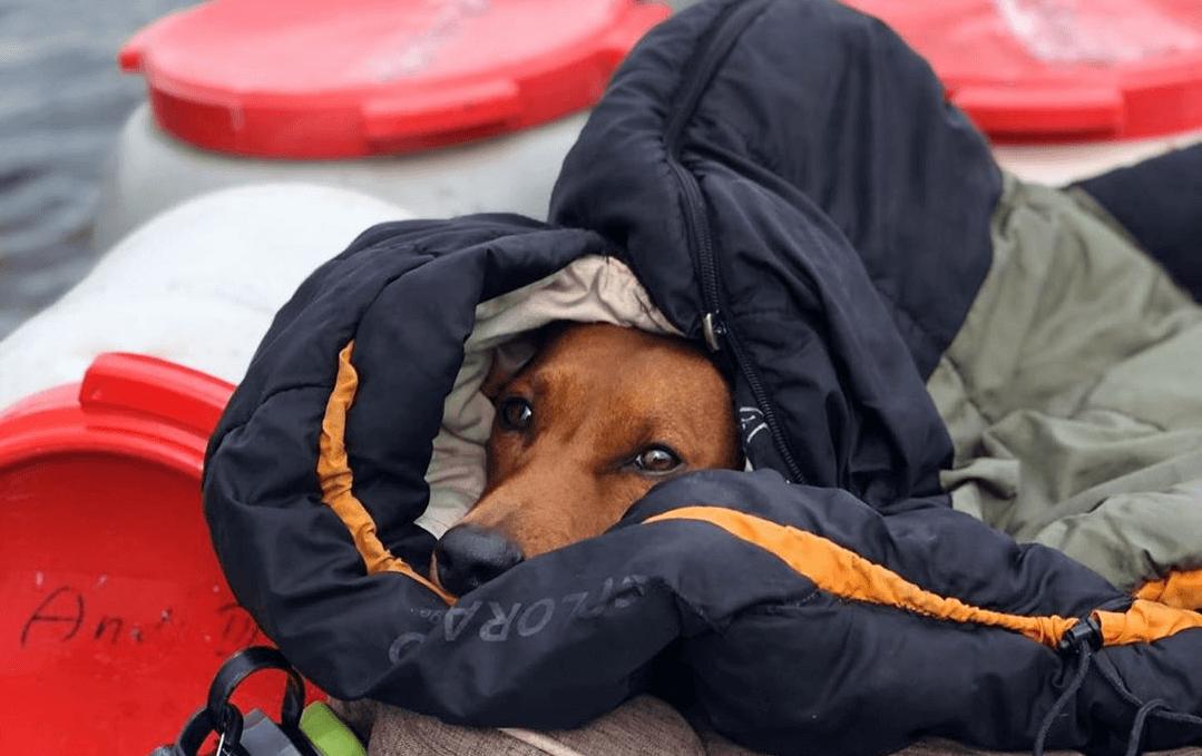 Urlaub mit dem Hund in Schweden 1