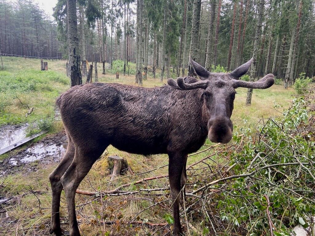 3 Wildnis-Aktivitäten für Schweden im Herbst 2