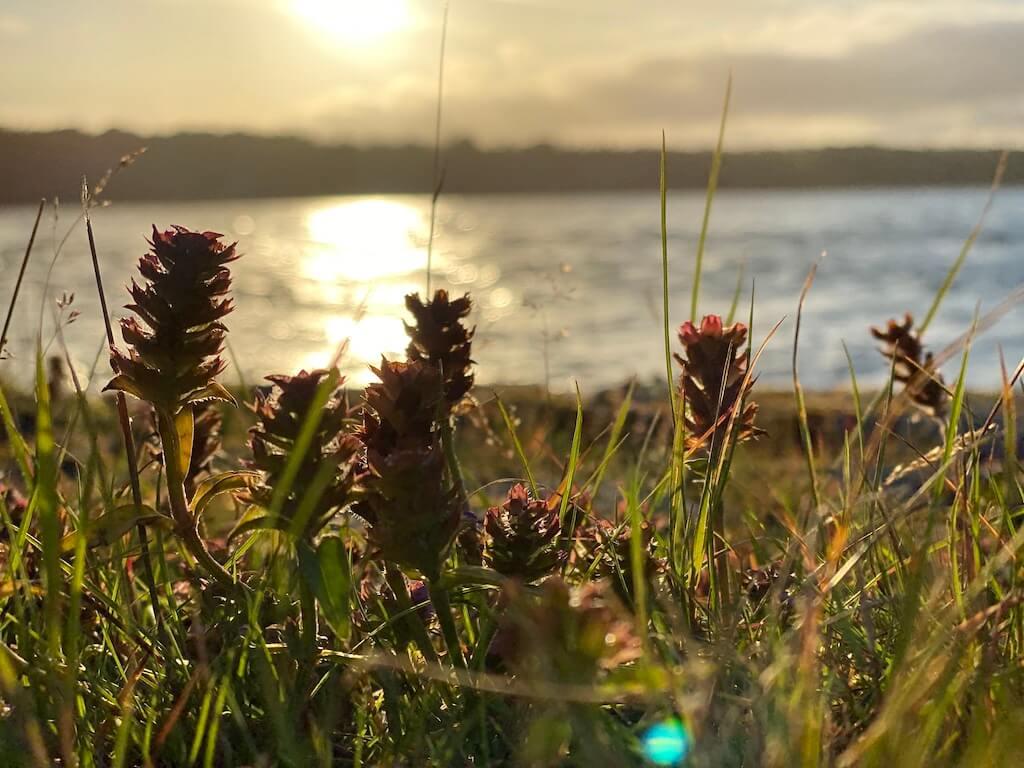 3 Wildnis-Aktivitäten für Schweden im Herbst 1