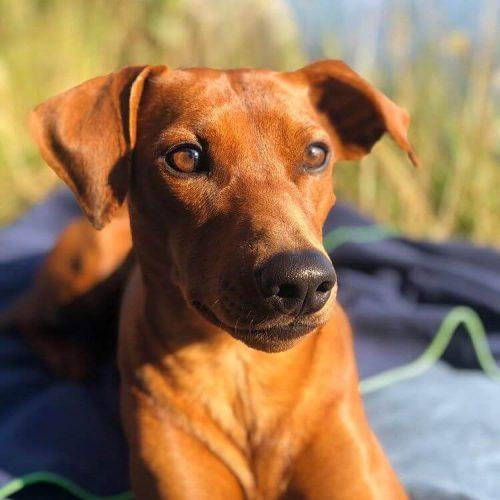 Urlaub mit Hund Schweden